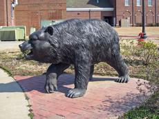 Alumni Bear