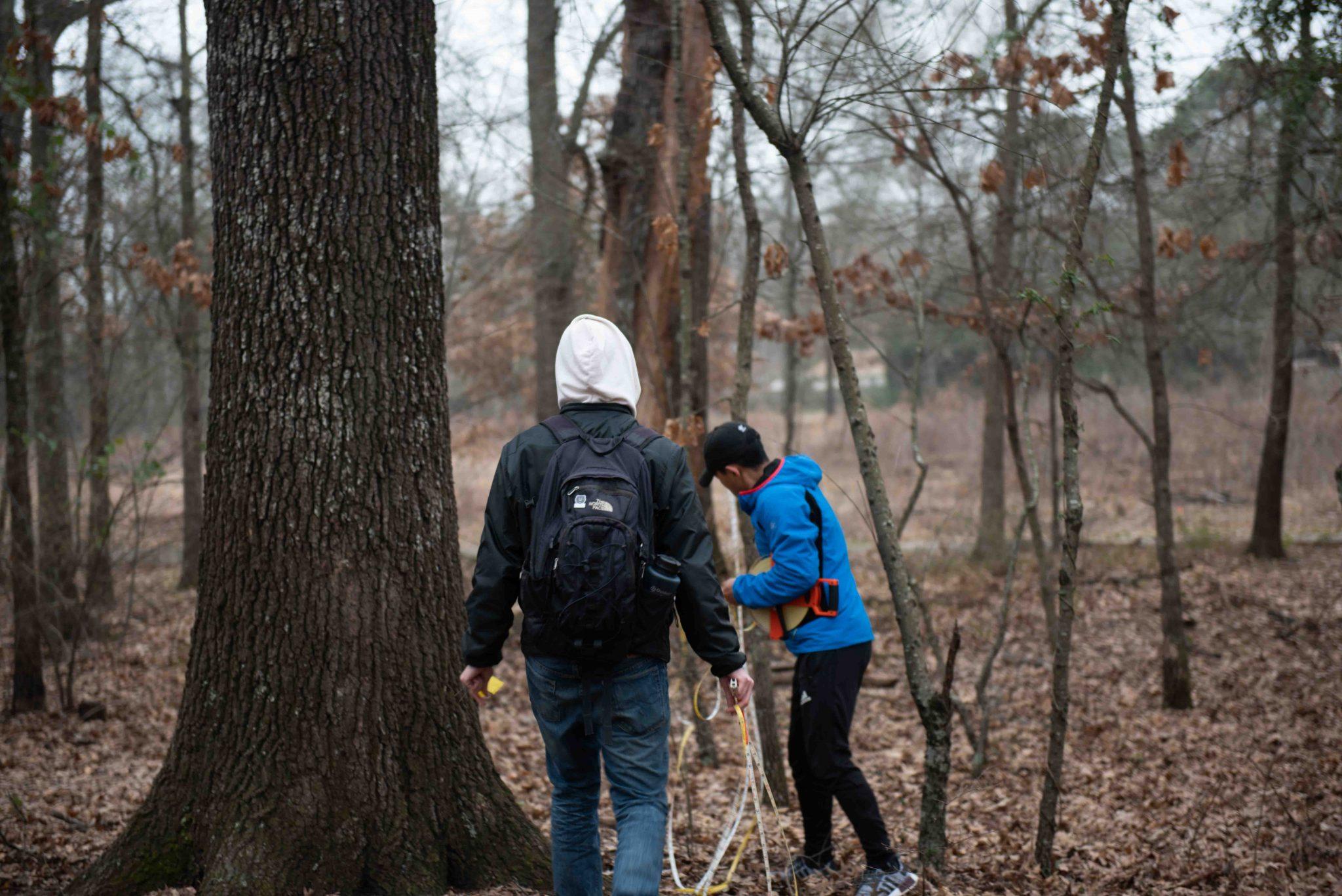 Tree ID Biogeography class 001