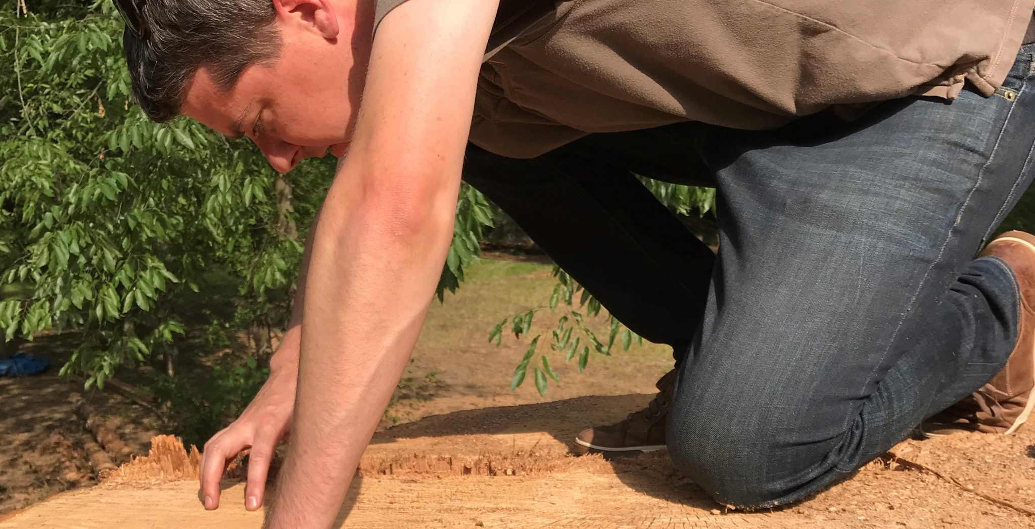 Dr. Flatley inspects rings on a recently cut tree