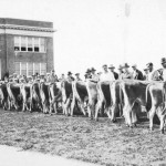 Livestock judging in front of Old Main (1925)