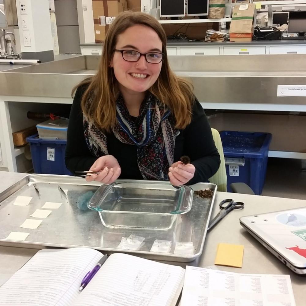 Ashley Barto:  Chicago Botanic Garden Echinacea Project