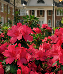 Wingo Hall in the spring.